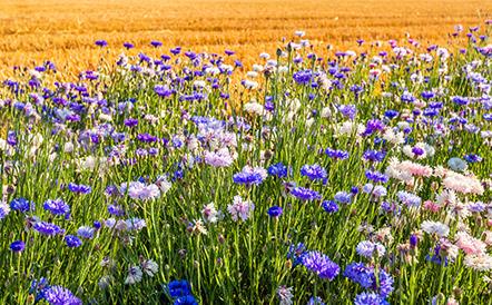 agriculture-biologique-biodiversite-leanature