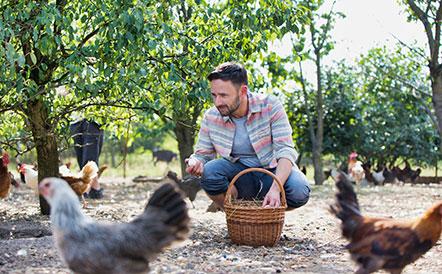 agriculture-biologique-bienetre-animal-leanature