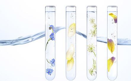 la-source-infusion-botanique-leanature