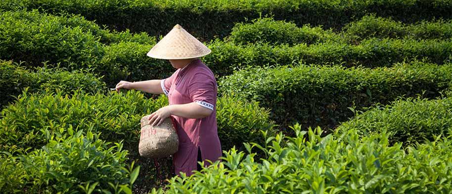 produits-commerceequitable-jardinbio-leanature