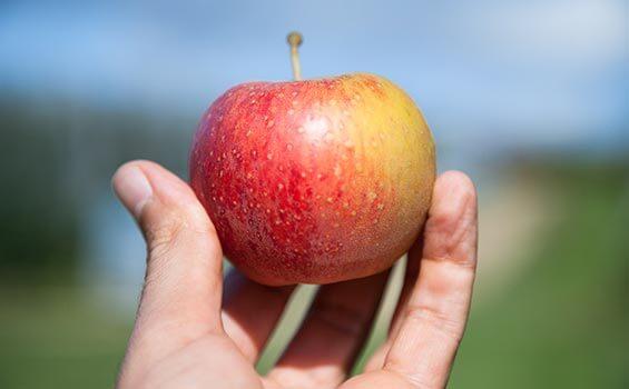 partenariat-filiere-pommes-bio-leanature