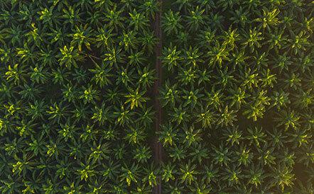 suppression-huile-de-palme-leanature